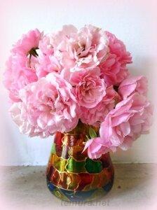 rosa19